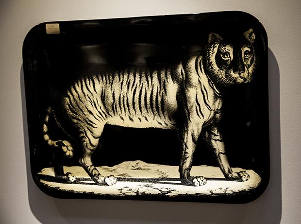 tray tigre